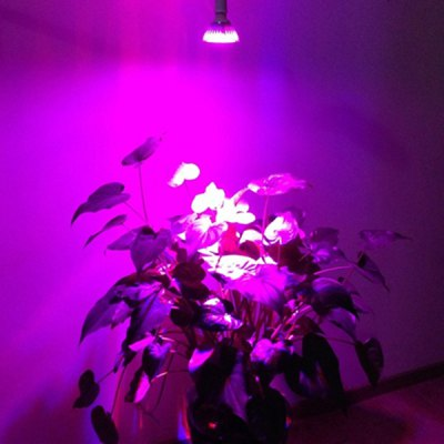 YouOKLight 12W Blue + Red Daylight Spectrum 12 LEDs Grow Light for Indoor Plants