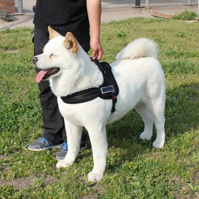 S Size Adjustable Large / Middle Size Dog Chest Strap for Outdoor Activity