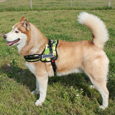 Фотография Large / Middle Size Dog  Chest Strap