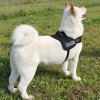 cheap Large / Middle Size Dog  Chest Strap