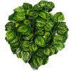 Artificial 2m Watermelon Leaves Rattan - 12Pcs deal