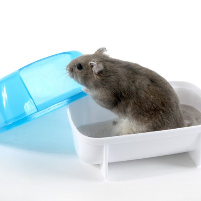 Lovely Hamster Bath Room Toilet от GearBest.com INT