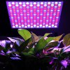 Buy Excelvan 14W 225 SMD LED Hydroponic Plant Grow Light & Lighting Panel, Full Spectrum Flower Vegetable Greenhouse Garden, Red&Blue&White Indoor + Hanging Kit,EU. ( II Generat-26.72 Online Shopping GearBest.com