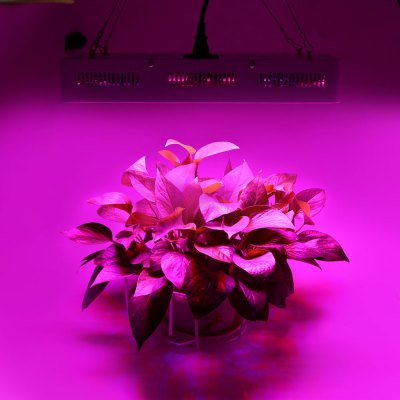 1200W ( True 340W ) LED Plant Grow Light