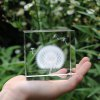 cheap Crystal Cube Dandelion Decoration